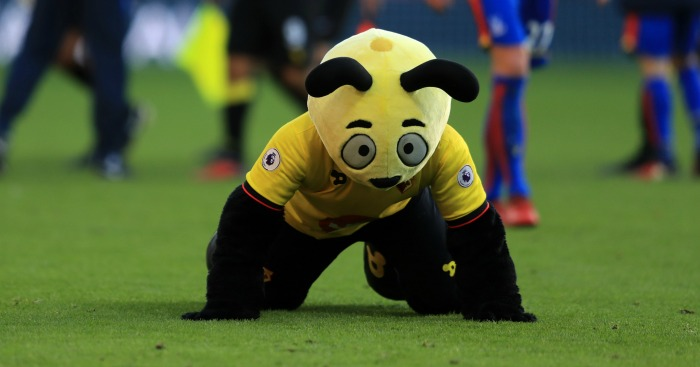 Harry the Hornet: Could be in trouble